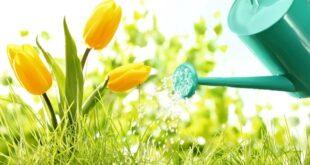 تعبیر خواب آبیاری گلها , خواب آب دادن به گل , تعبیر خواب سایت دالپری